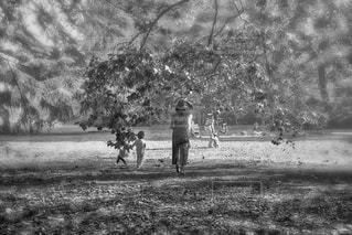公園を散歩する親子。の写真・画像素材[1296460]