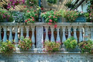 花いっぱいのイタリアンレストラン。の写真・画像素材[1314403]