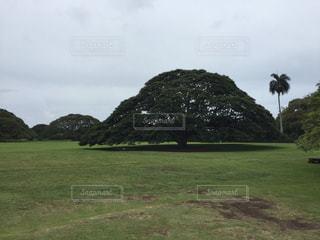 バック グラウンドでモアナルア ・ ガーデンの背景の木の大規模なグリーン フィールドの写真・画像素材[1248445]