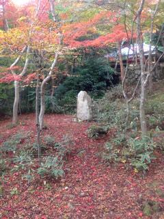 秋の1ページの写真・画像素材[1248691]