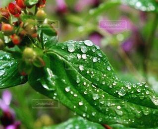 自然の写真・画像素材[55800]