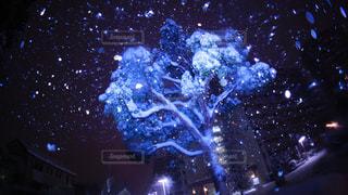 真夜中の雪の写真・画像素材[1249501]