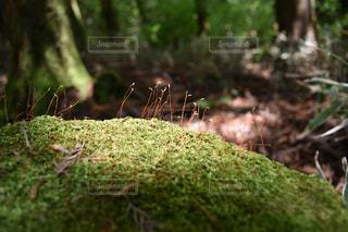 苔の世界の写真・画像素材[1255581]