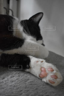 猫の肉球の写真・画像素材[1265358]