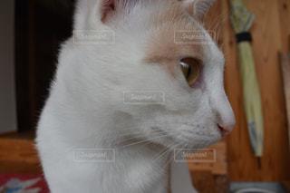 猫の横顔の写真・画像素材[1265362]