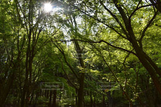 森の中の写真・画像素材[1265393]