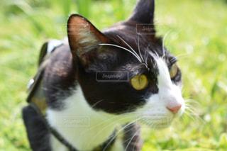春の猫の写真・画像素材[1265474]
