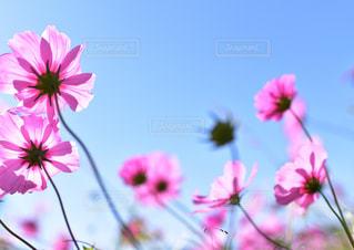 近くの花のアップ - No.1249766