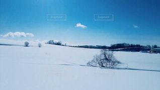 雪原と空の写真・画像素材[1256528]