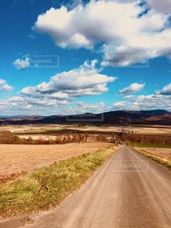 甜菜畑の道路の写真・画像素材[1256556]