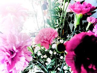近くの花のアップの写真・画像素材[1396279]