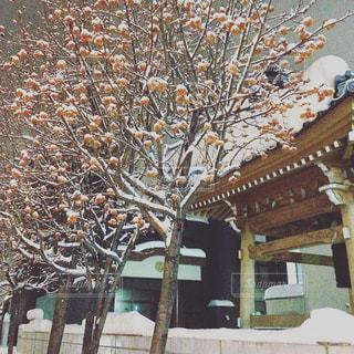 冬のお寺の写真・画像素材[1250270]