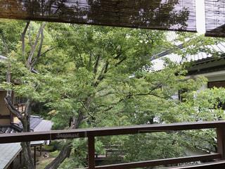 木製のフェンスのビューの写真・画像素材[1257620]