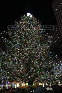 観衆の前でクリスマス ツリーの写真・画像素材[1251830]