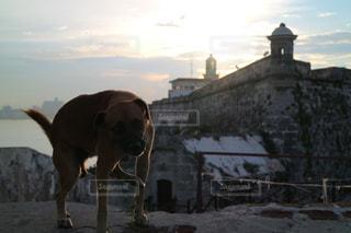 野良犬の写真・画像素材[1252413]