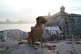 野良犬の写真・画像素材[1252414]