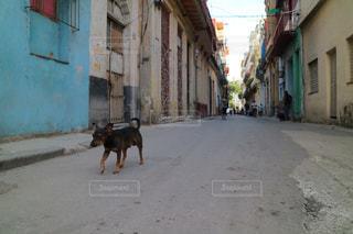 通りの野良犬の写真・画像素材[1252422]