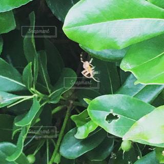 蜘蛛の写真・画像素材[1251280]