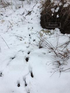 雪の獣道の写真・画像素材[3080025]