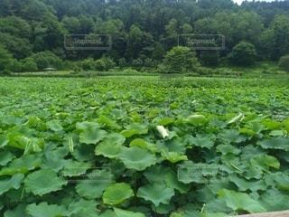 夏至の日の明日見湖の写真・画像素材[3346328]