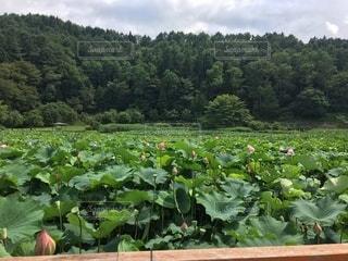 令和2年8月1日の明日見湖の写真・画像素材[3505142]