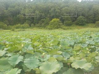 令和2年9月1日撮影の明日見湖の写真・画像素材[3634429]
