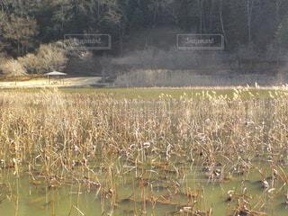 令和3年(2021年)2月28日撮影の明日見湖の写真・画像素材[4206204]