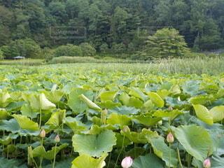 令和3年(2021年)7月15日撮影の明日見湖の写真・画像素材[4644584]