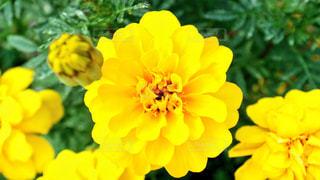 花の写真・画像素材[1253439]