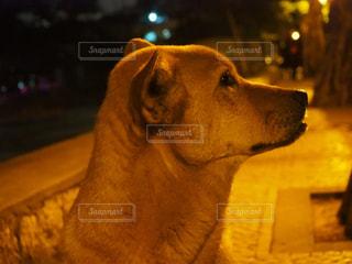 近くに犬のアップの写真・画像素材[1254138]