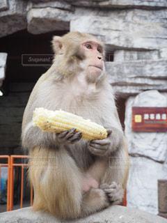 建物の前に座っている猿の写真・画像素材[1255929]