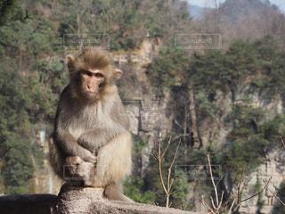 森の前に座っている猿の写真・画像素材[1255938]