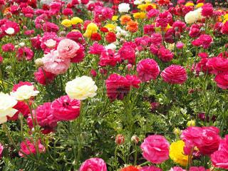 近くの花のアップの写真・画像素材[1260947]
