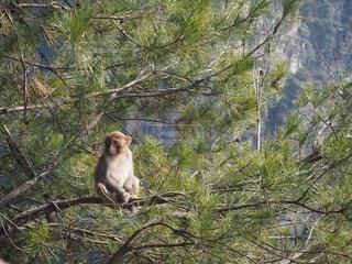 枝の上に座る猿の写真・画像素材[1260970]