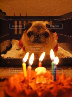 パグ犬の誕生日 - No.1254169