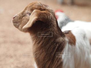 動物の写真・画像素材[234101]