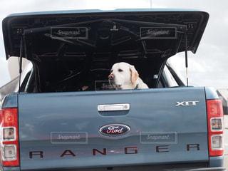 犬 - No.234104