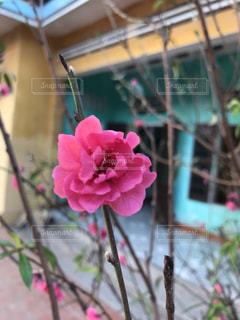 近くの花のアップの写真・画像素材[1543772]