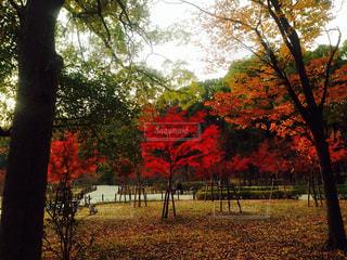赤 樹木の写真・画像素材[1447036]