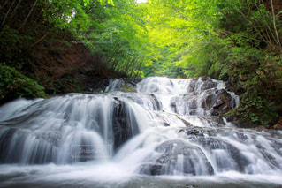 魚止めの滝の写真・画像素材[1392822]