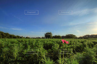 近くに緑豊かな緑のフィールドのの写真・画像素材[1392849]