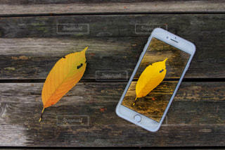 小さい秋の写真・画像素材[1457121]