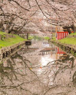 川越氷川神社裏の新河岸川の写真・画像素材[1881054]