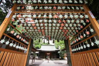 川越氷川神社の写真・画像素材[3459962]