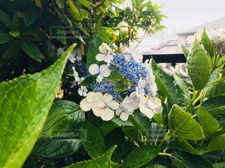 近くの植物のアップの写真・画像素材[1265495]