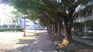 歩道の上のヤシの木 - No.1255376