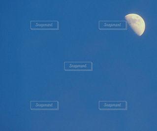 空を飛んでいる鳥の写真・画像素材[1260134]