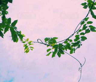 近くの植物のアップの写真・画像素材[1260136]