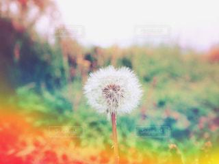 花のぼやけた画像の写真・画像素材[1265916]