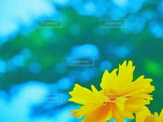 近くの花のアップの写真・画像素材[1273135]